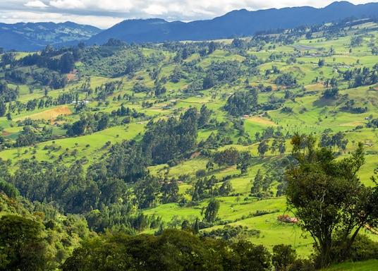 جراردوت, كولومبيا
