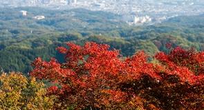 Όρος Takao