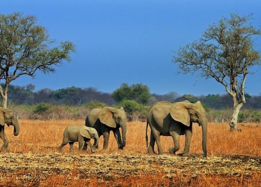 南盧安瓜國家公園, 尚比亞