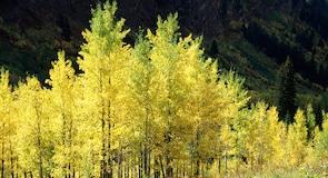 Yellowstonský národný park – južný vstup