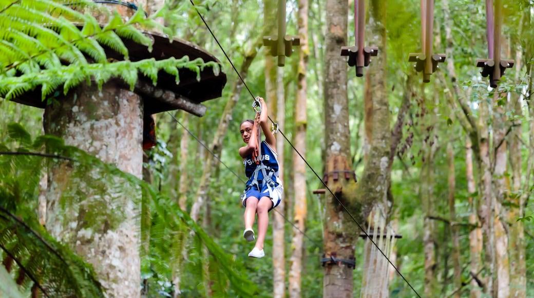 Taman Petualangan Atas Pohon Bali