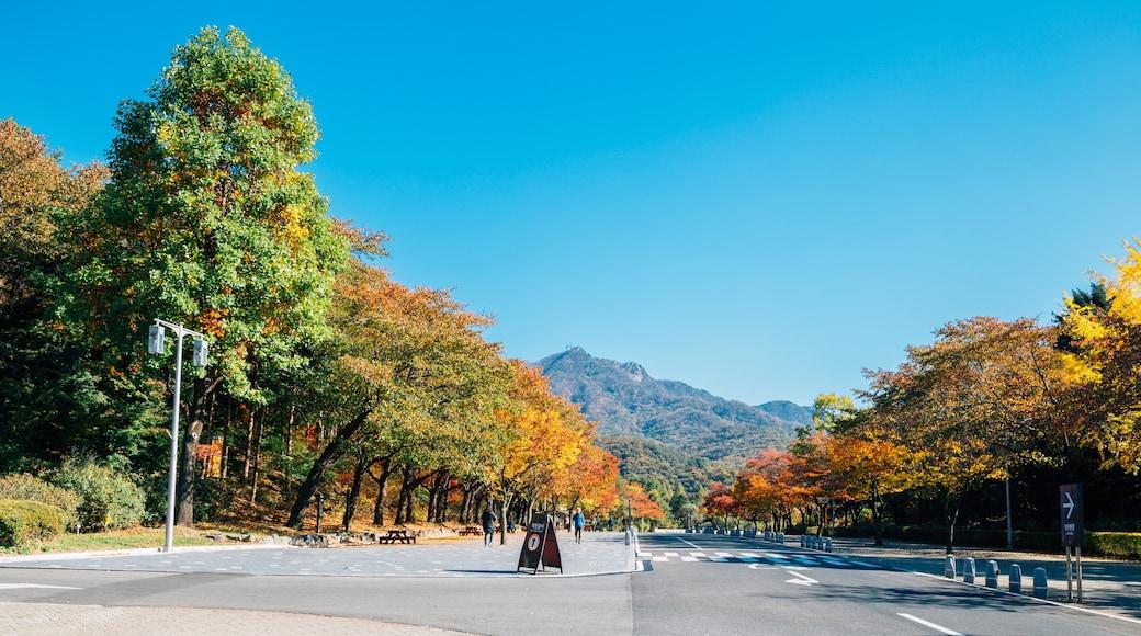 Gwacheon
