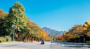Groot park van Seoel