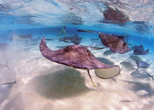 Grand Cayman, Ilhas Cayman