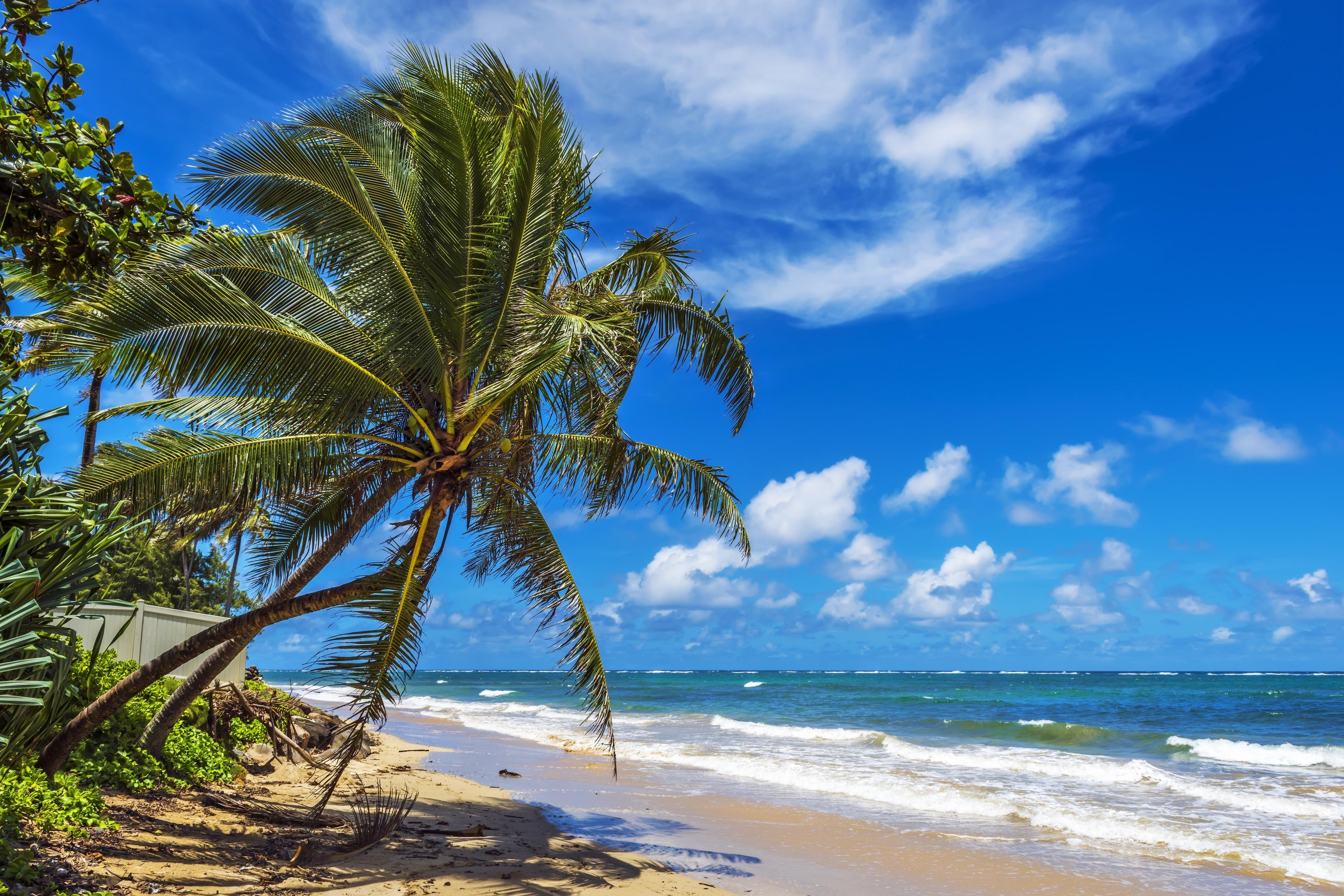 Punalu'u Beach, Pahala, Hawaii, United States of America
