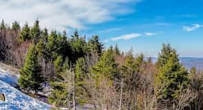 รีสอร์ทสกี Snowshoe Mountain