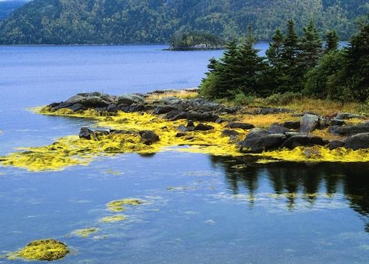 纽芬兰-拉布拉多, 加拿大