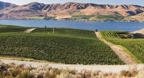 Badger Mountain Vineyard (vignobles)