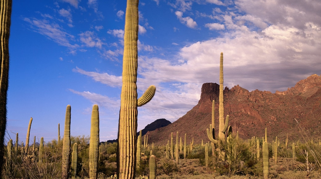 Monumento Nacional Organ Pipe Cactus