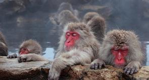 Parque dos Macacos de Jigokudani