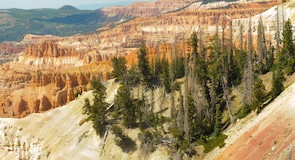 Cedar Breaks National Monument (réserve naturelle)