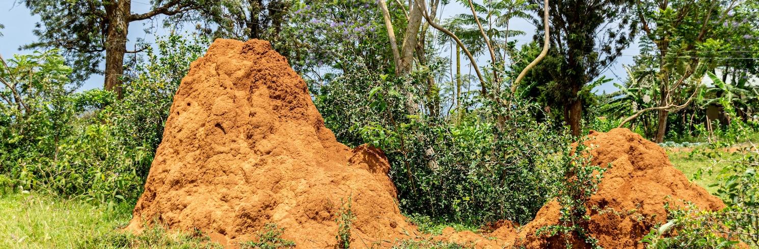 馬薩卡, 烏干達