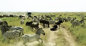 塞倫蓋提國家公園