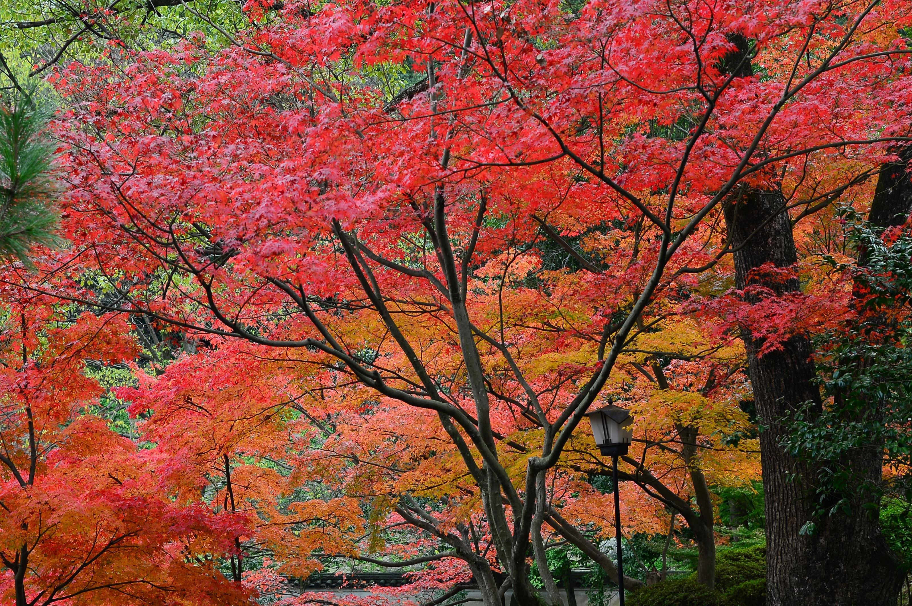 Wakayama, Wakayama (prefectuur), Japan