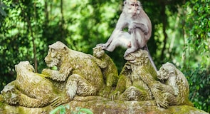 Мавп'ячий ліс Ubud (Ubud Monkey Forest)