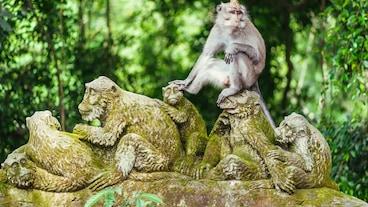 Małpi