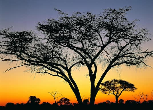 ワンゲ国立公園, ジンバブエ