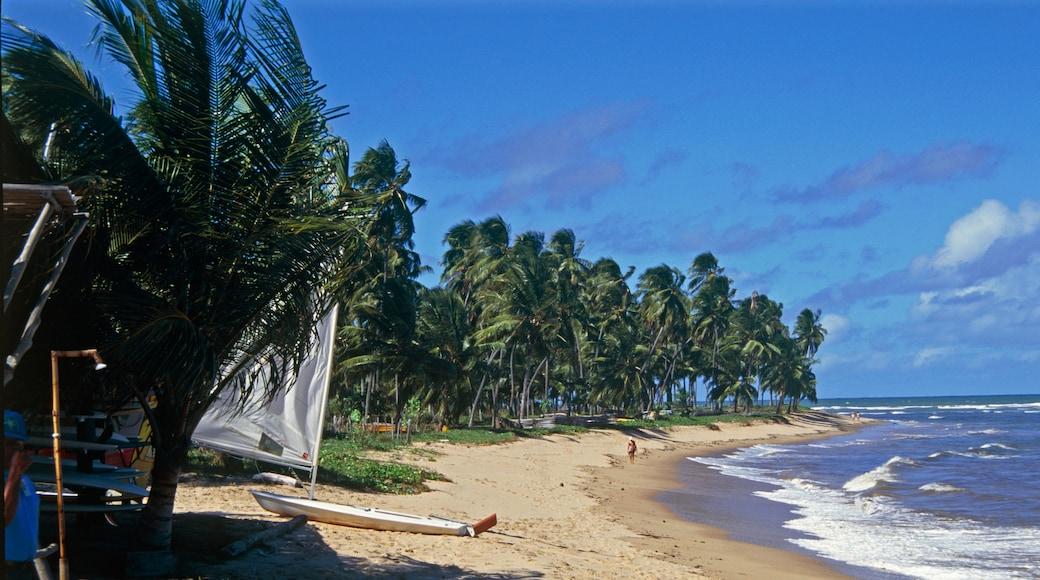 Mata de São João Bahia
