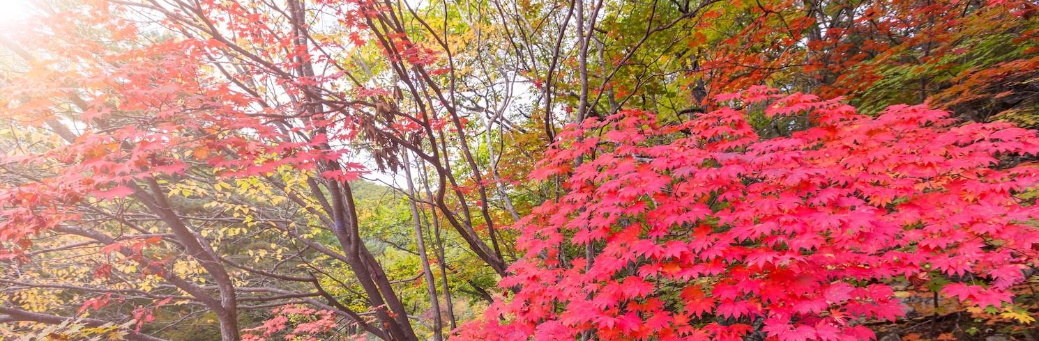 Ulsan, Hàn Quốc