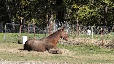 Mustang/