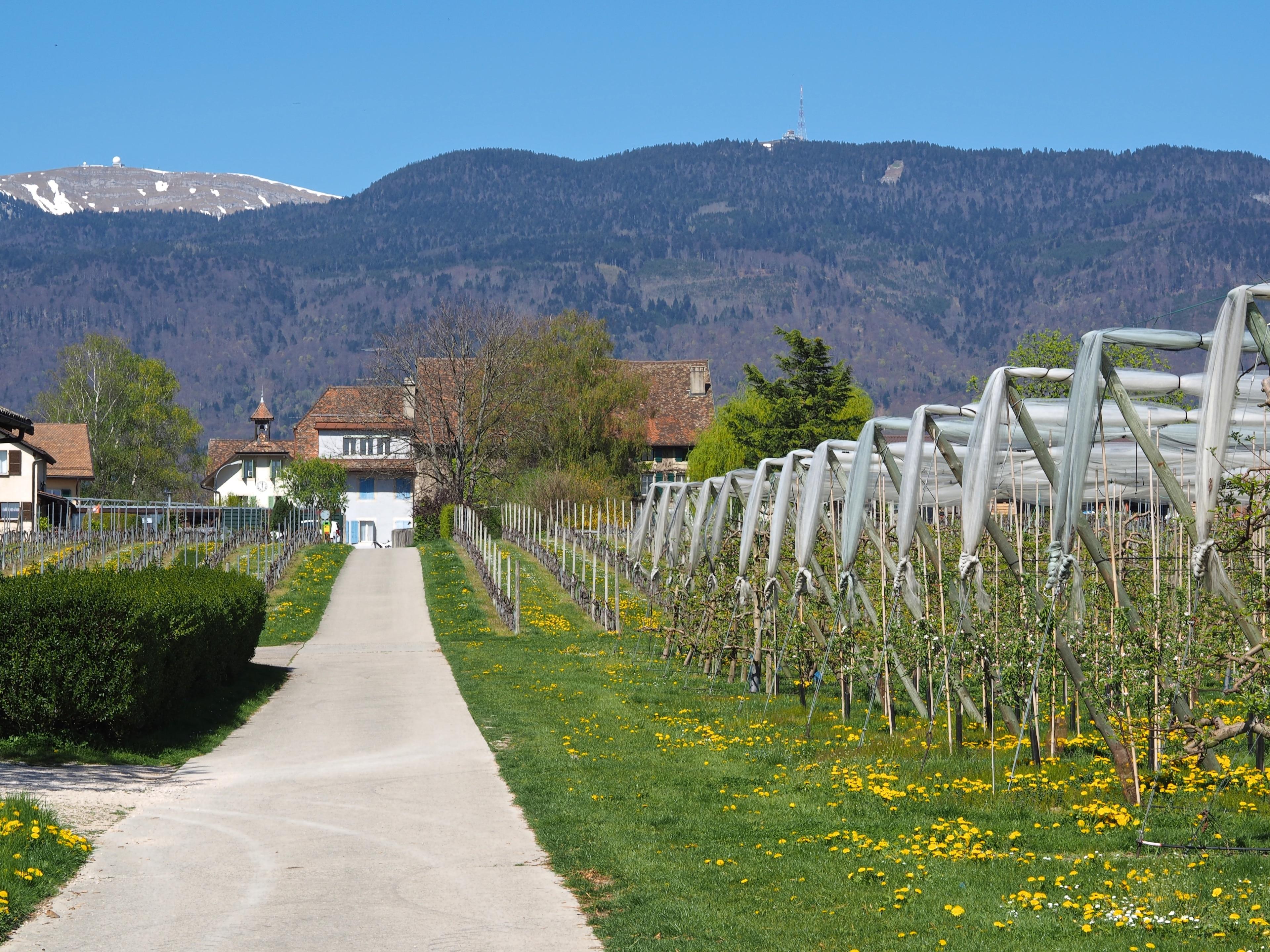 Nyon District, Canton of Vaud, Switzerland