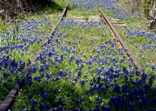 Kingsland, Texas, United States of America