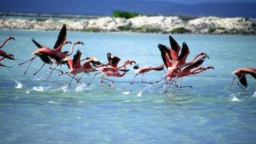 Flamingóaathvarfið