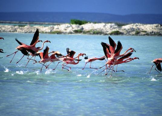 Bonaire, Bonaire, San Eustaquio y Saba