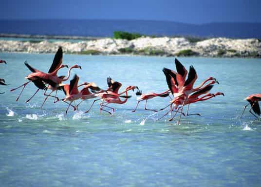 Bonaire, Bonaire, Sint-Eustatius ja Saba