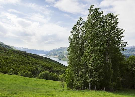 Оппланд, Норвегія