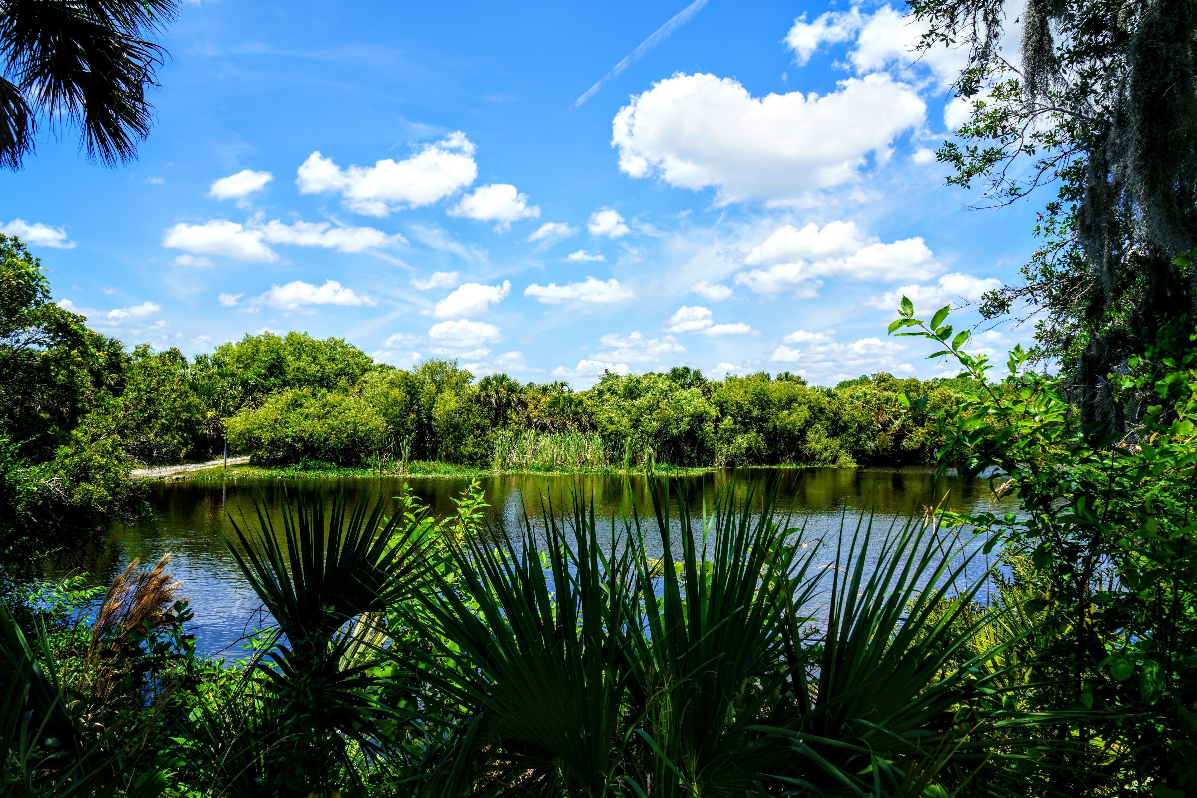 Myakka River State Park, Sarasota, Florida, USA