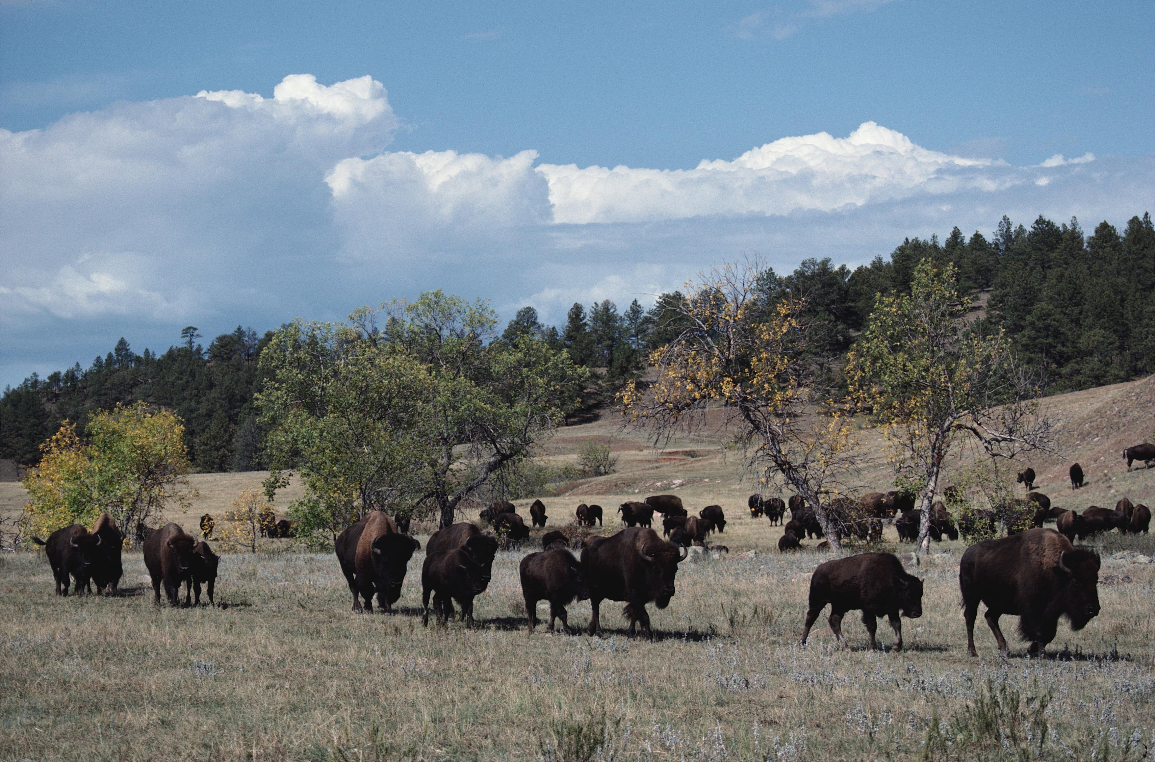 Custer State Park, Fairburn, South Dakota, United States of America