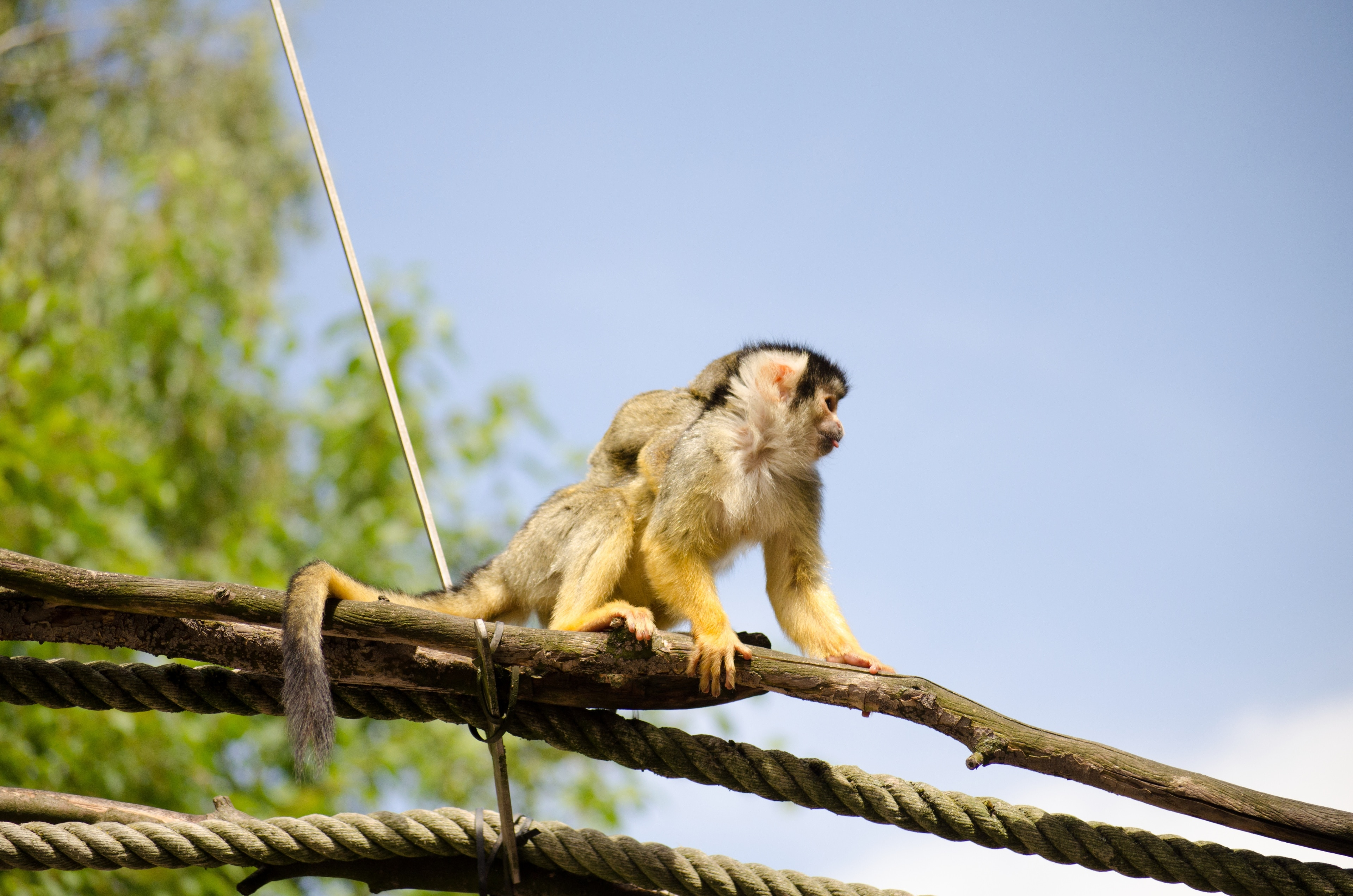 Why not meet the animals who live at Nuremberg Zoo during your trip to Ost? Experience the area's festivals and museums.