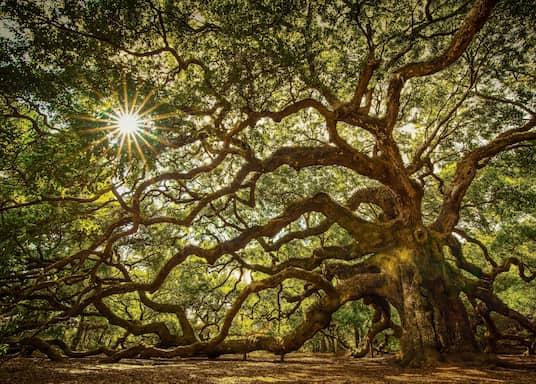 Đảo Johns, Nam Carolina, Mỹ