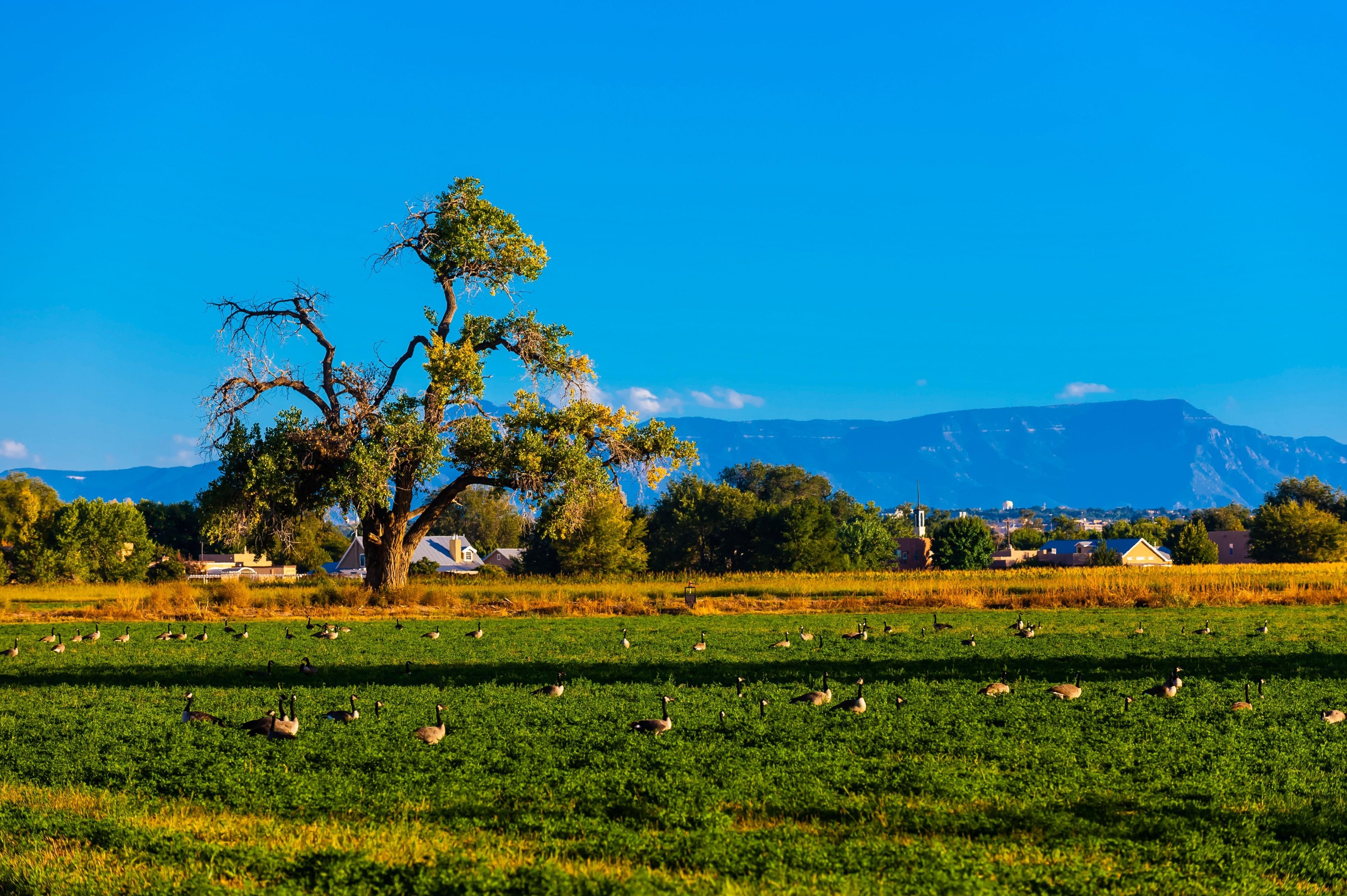 Los Ranchos de Albuquerque, New Mexico, USA