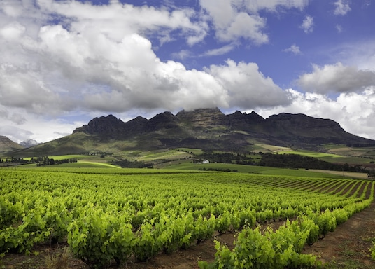 Fokváros, Dél-Afrika