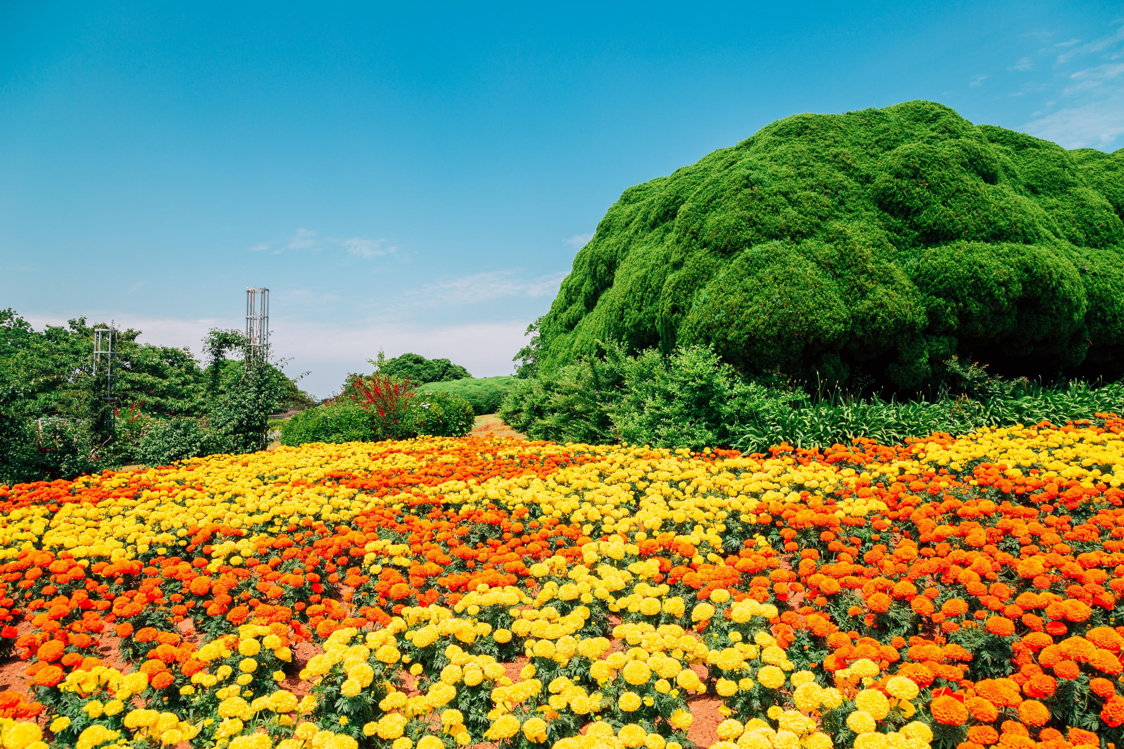 Nishi-ku, Fukuoka (prefektur), Japan