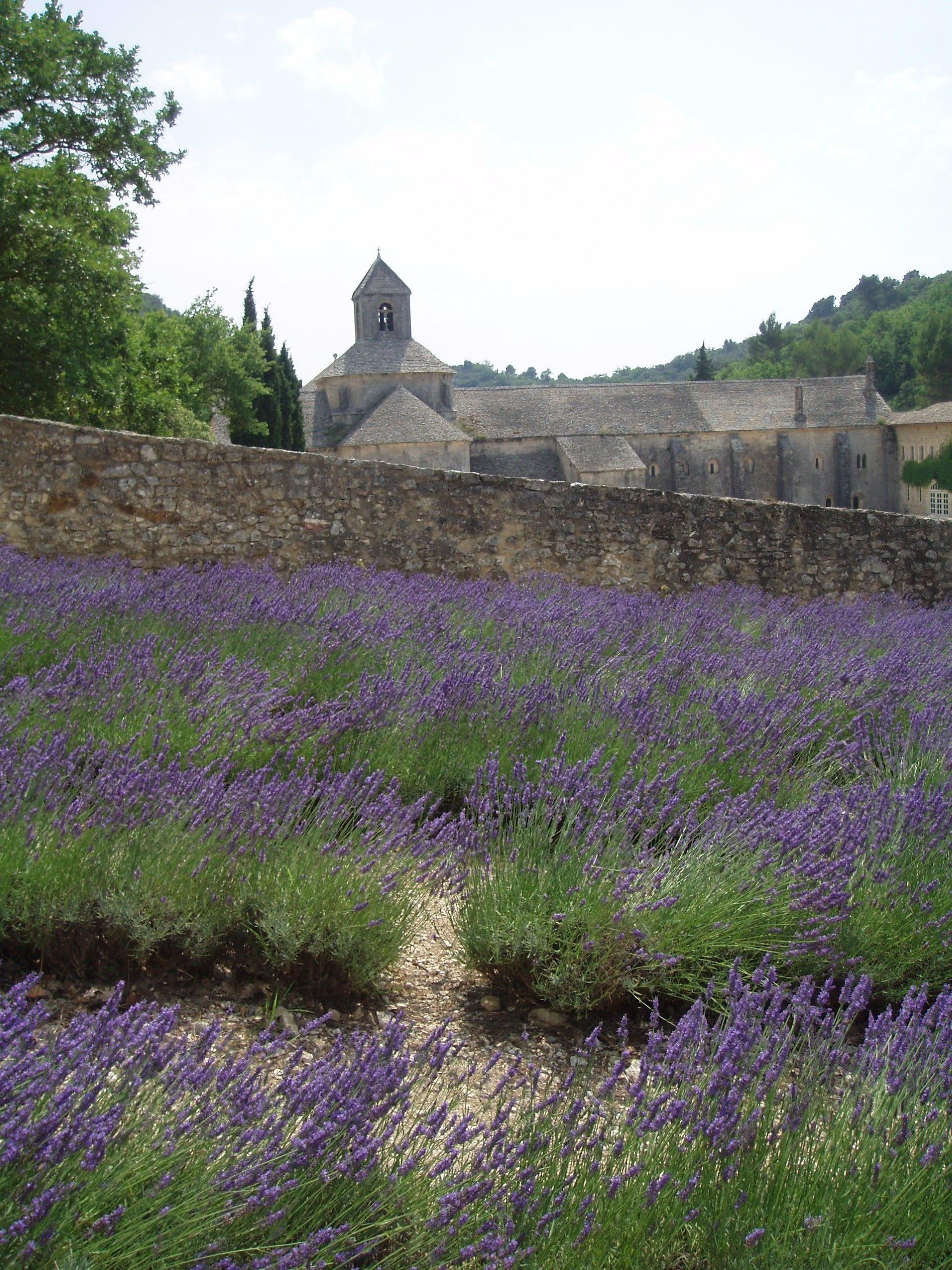 Senanque Abbey, Gordes, Vaucluse, France