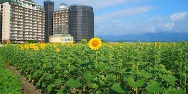 Moriyama, Shiga Prefecture, Japan