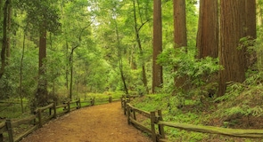 Henry Cowell Redwoods State Park