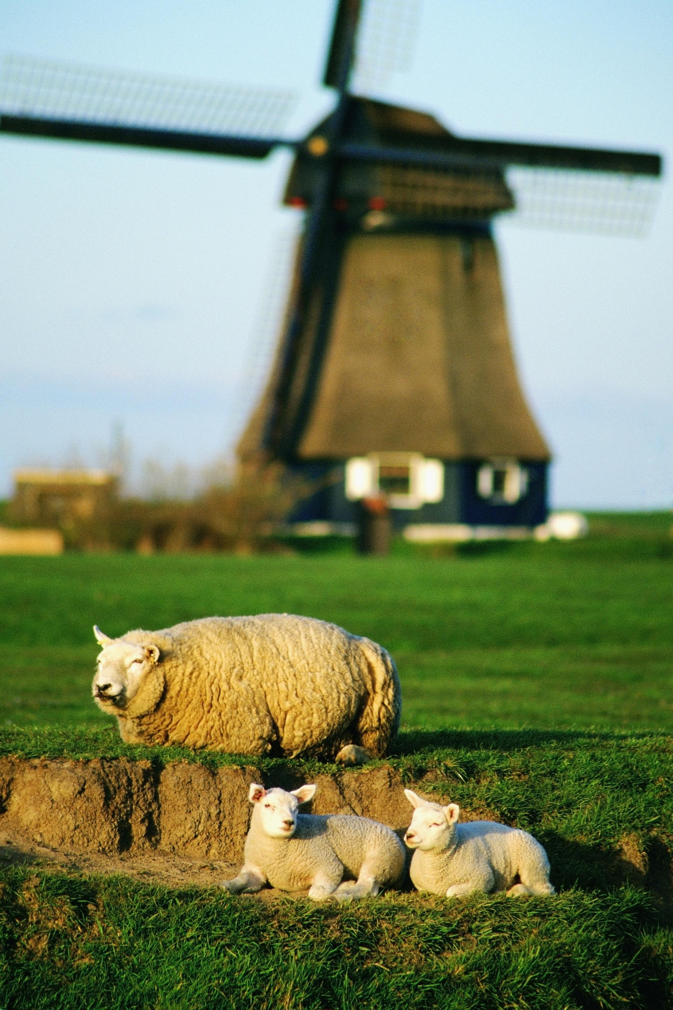 Petten, Nordholland, Niederlande