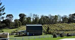 Spring Gate Vineyard