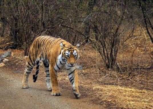 Sawai Madhopur, India
