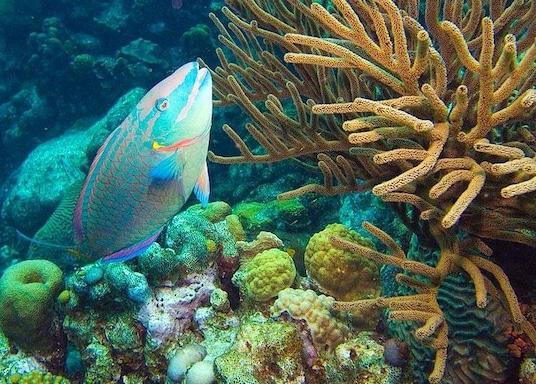Kralendijk, Bonaire, ซินท์เอิสทาทิอุสและซาบา