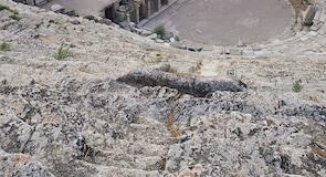 Hierapolis-leikhúsið
