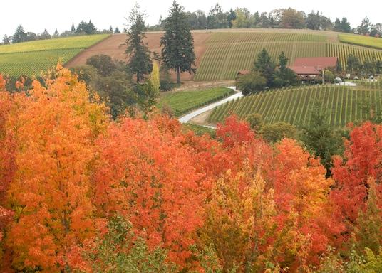 McMinnville, Oregon, Egyesült Államok