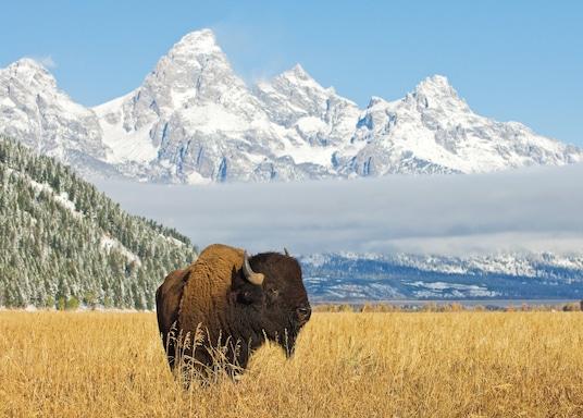 Jackson Hole (a okolie), Wyoming, Spojené štáty