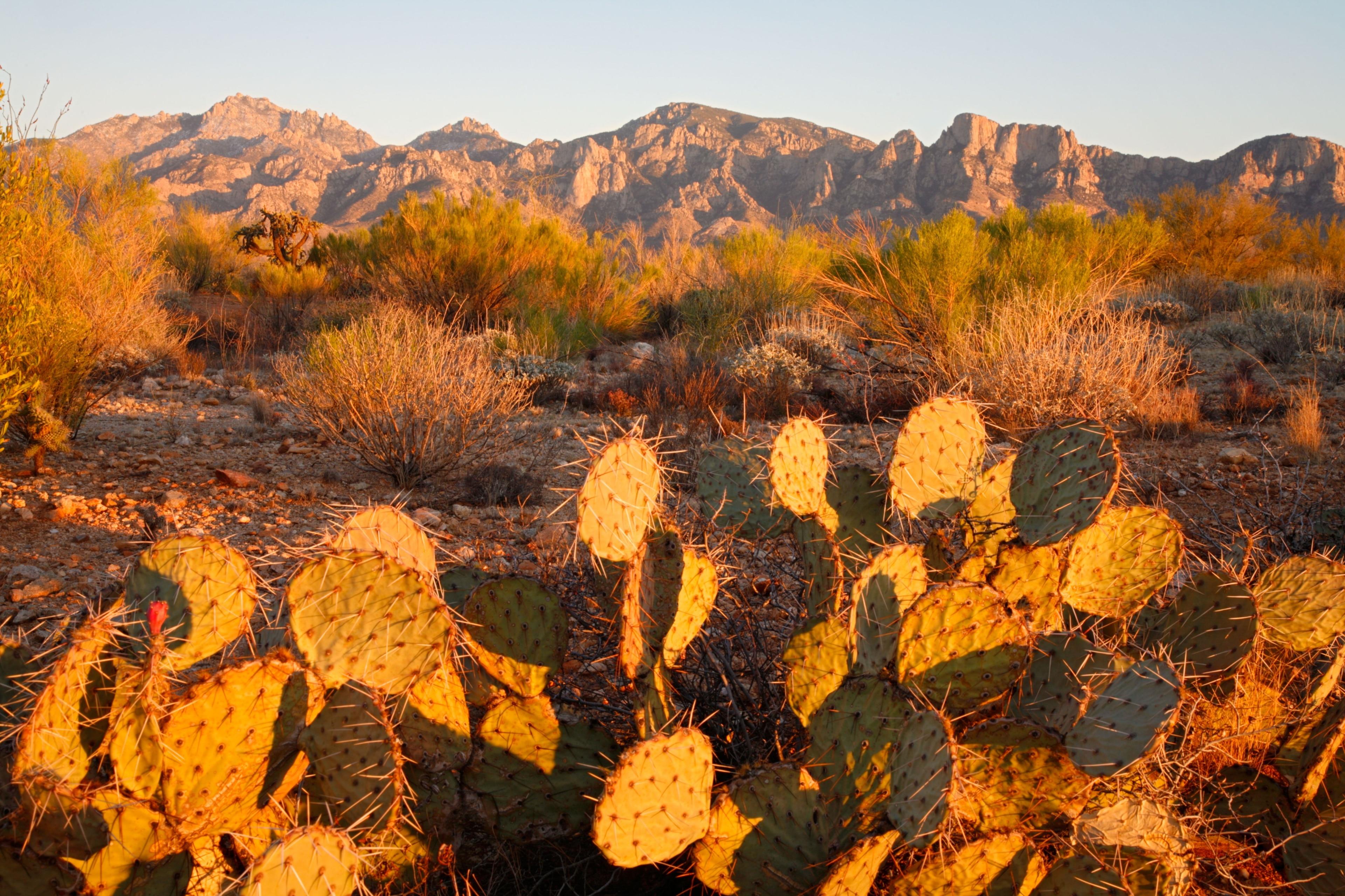 Oro Valley, Arizona, United States of America