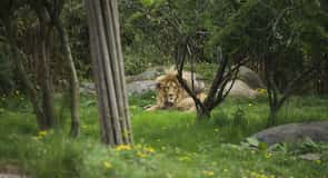 حديقة حيوانات لايبزغ