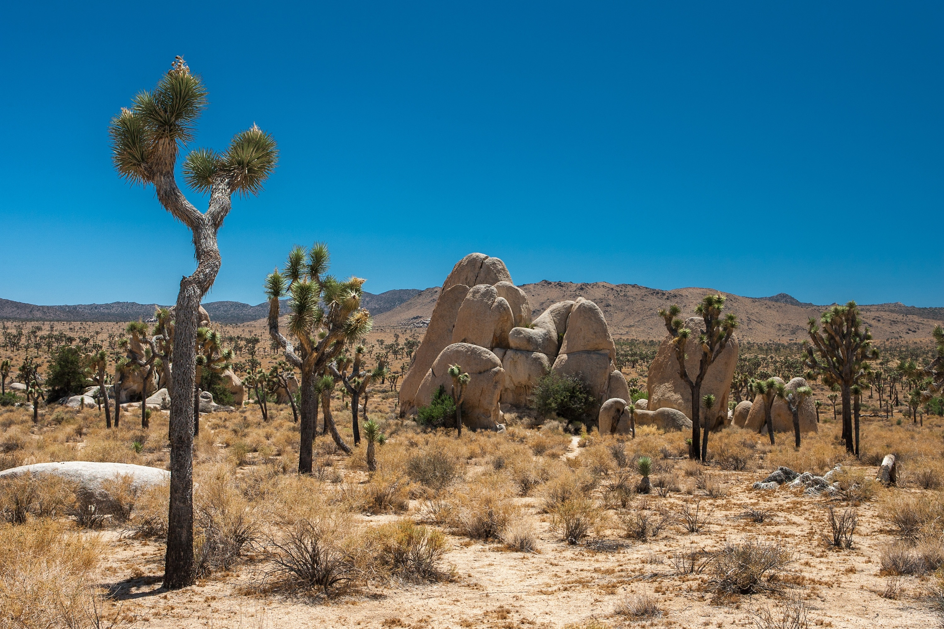Yucca Valley, California, United States of America